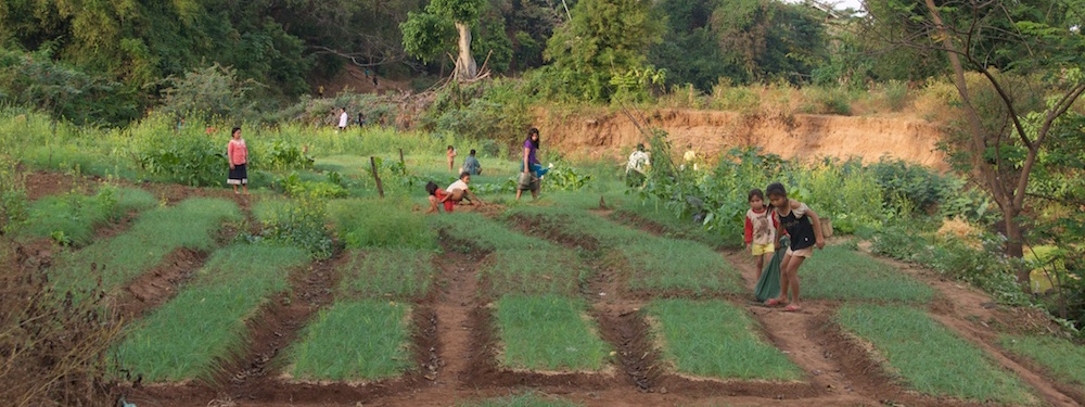 Women working in vegetable gardens near Tat Soung