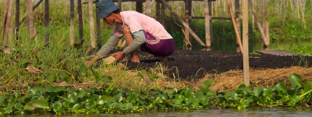 Planting vegetables at the Inle Lake